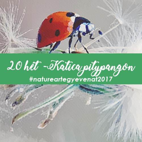 2017 20 hét KATICA PITYPANGON -natureart egy éven át