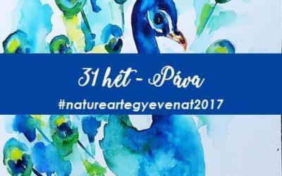 2017 31 hét PÁVA-natureart egy éven át