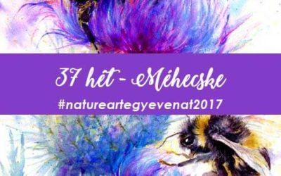 2017 37 hét MÉH-natureart egy éven át