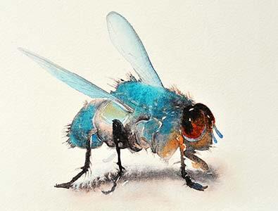 beepaintingHouseFly-Krum Fly