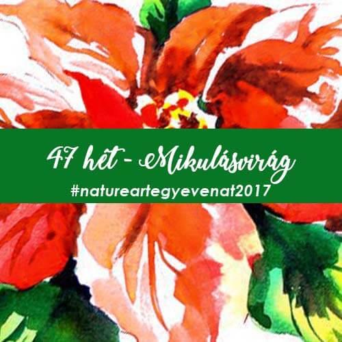 2017 47 hét MIKULÁSVIRÁG-natureart egy éven át