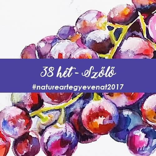 2017 38 hét SZŐLŐ-natureart egy éven át
